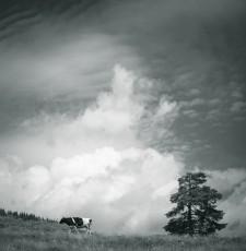 Holstein Frisian-Kuh mit Wolken auf Alm