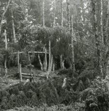 Almdschungel